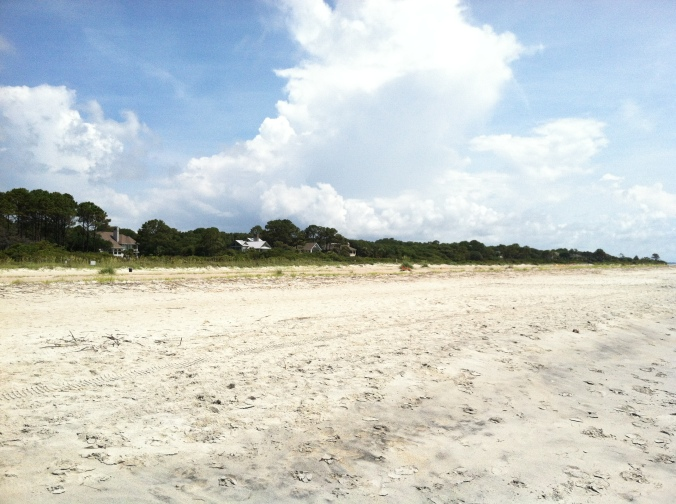 loggerhead nests and people nests