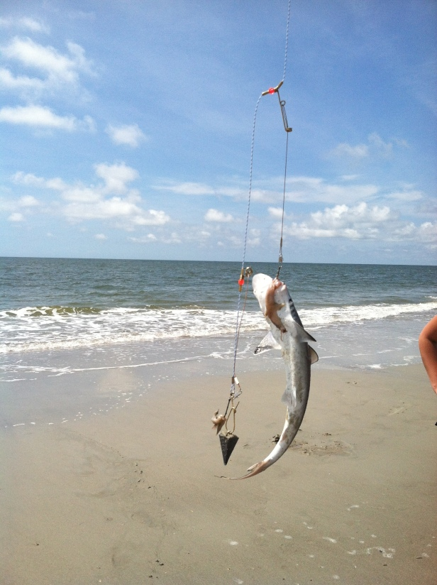 the shark catch